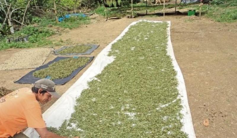 http://especiasyfrutas.com/wp-content/uploads/2020/02/fabrica-de-stevia-mas-grande-del-mundo-iniciara-operaciones-20929-1-1.jpg